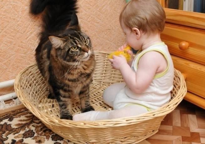 иммунитет - кошки