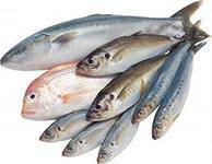 polsa ryby