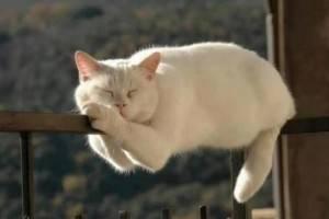 kochka spit