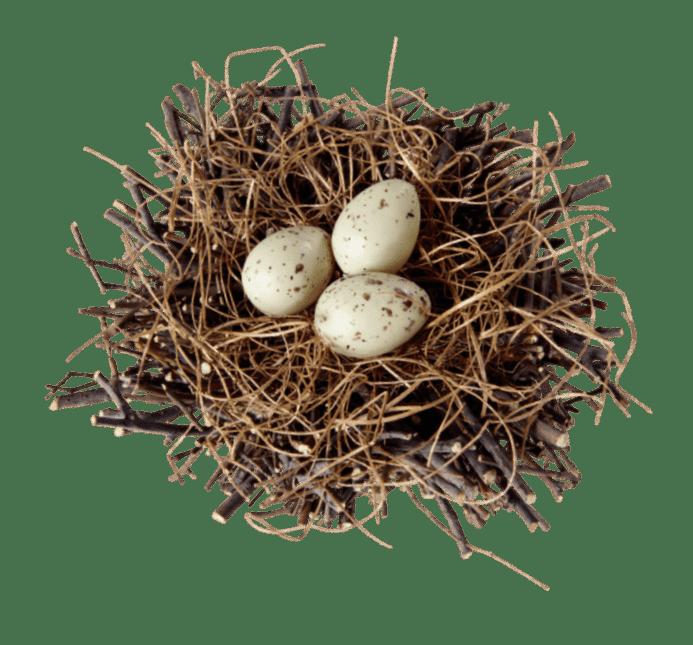 perepelinyii jajca