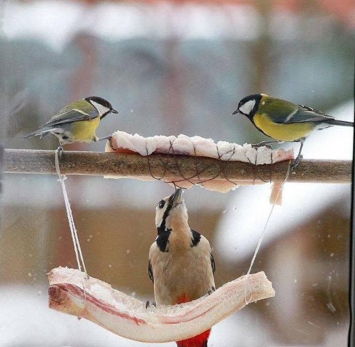 зима снегири сало