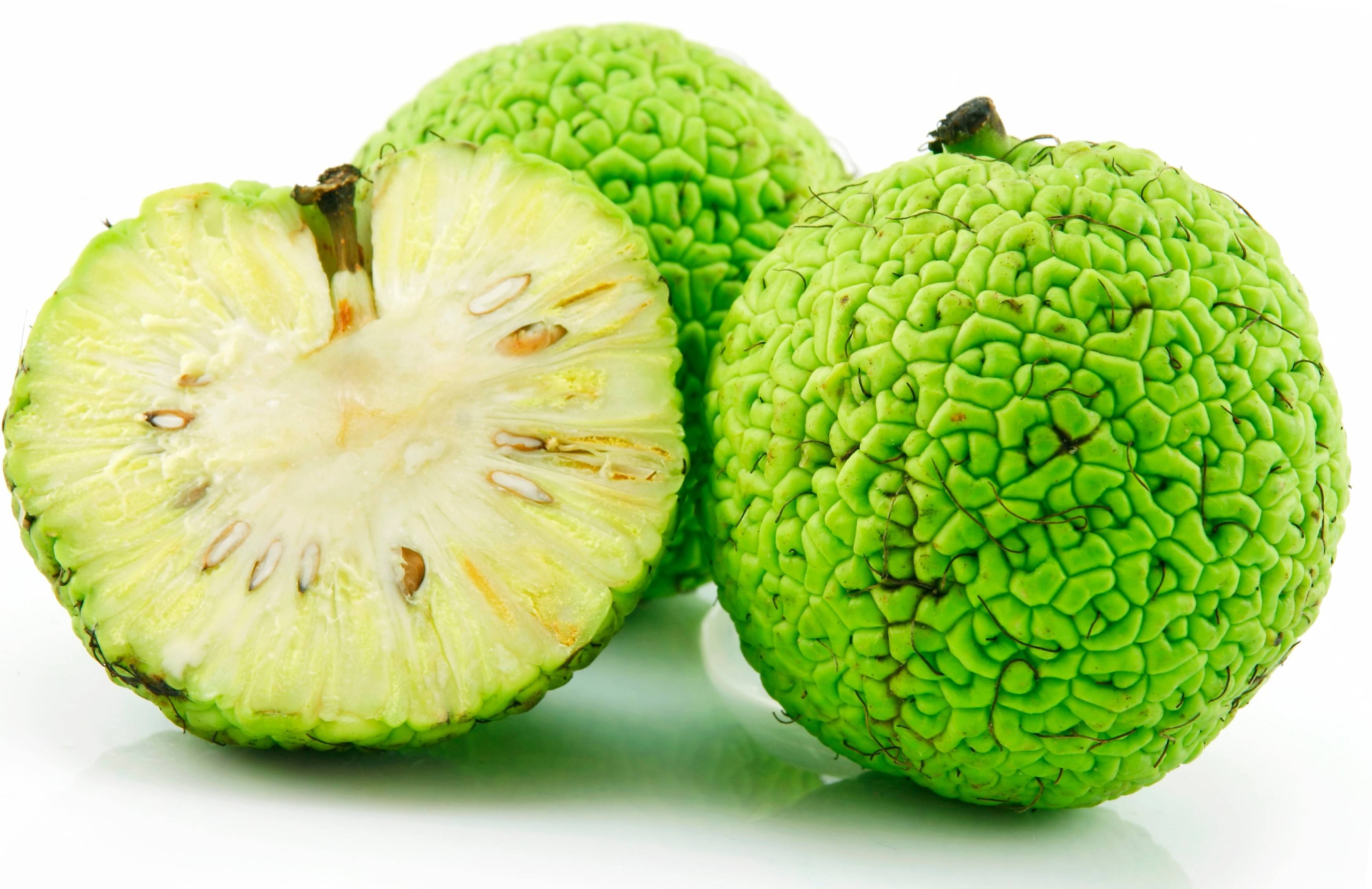 Sliced Osage Oranges (Maclura) Isolated on White Background