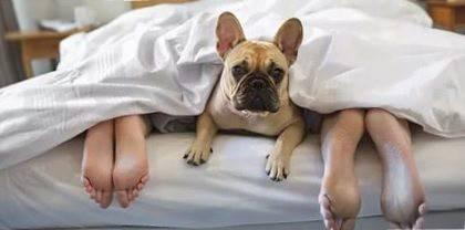 сон с собаками кошками