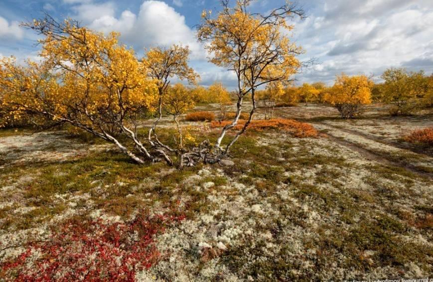 tundra letom