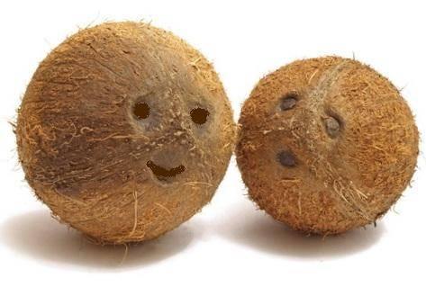 Копия cocos1-1