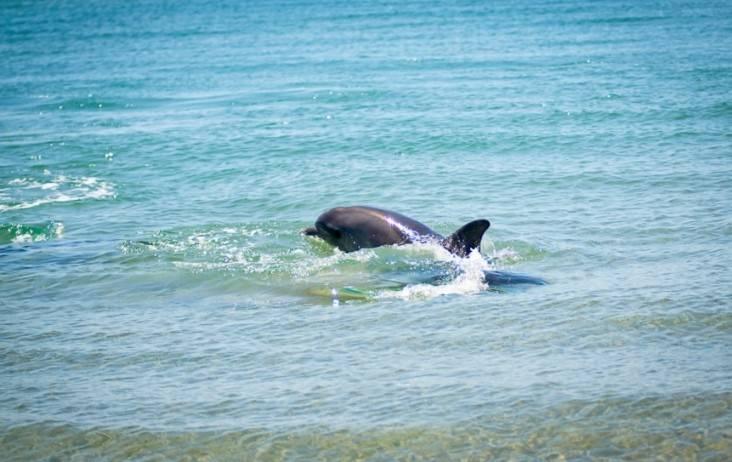 delfiny-vitjazeva