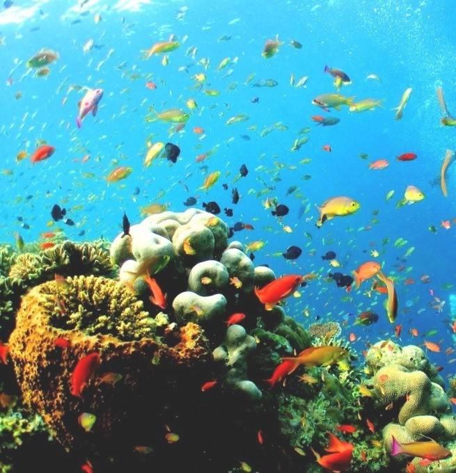 Бали подводный мир