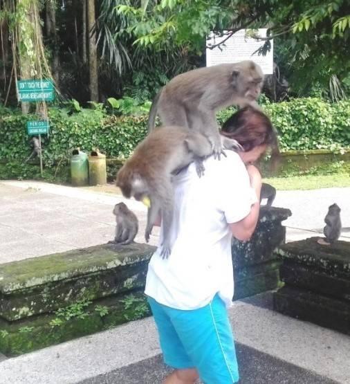 обезьяны Бали