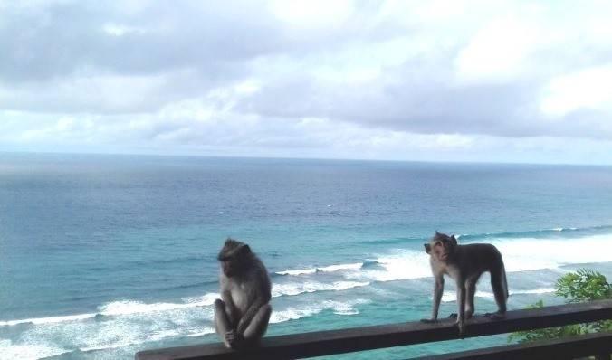 Goodbye, Bali или до свидания?