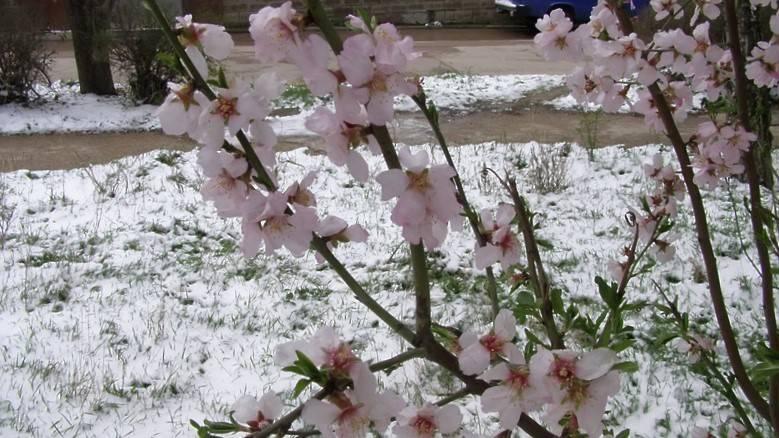 Холодные весна, лето 2017