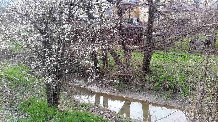 Цветут сады в душе у нас....