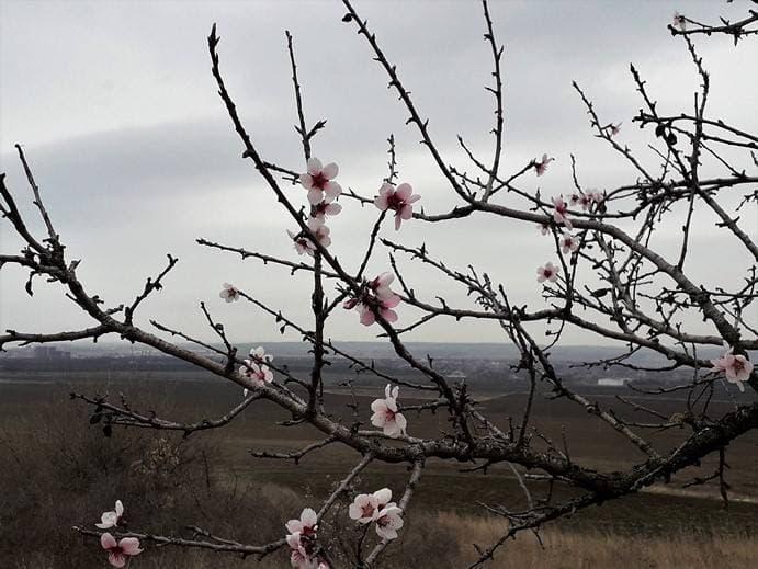 Весны цветенье