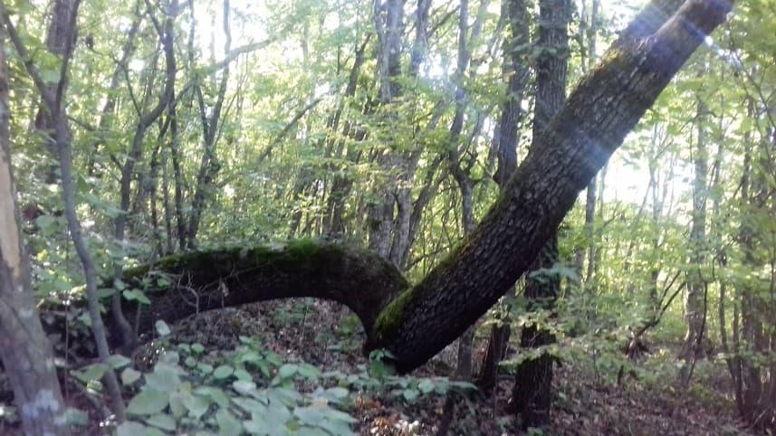 леса Анапы