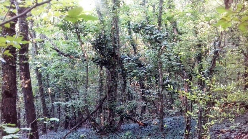 лес в анапе