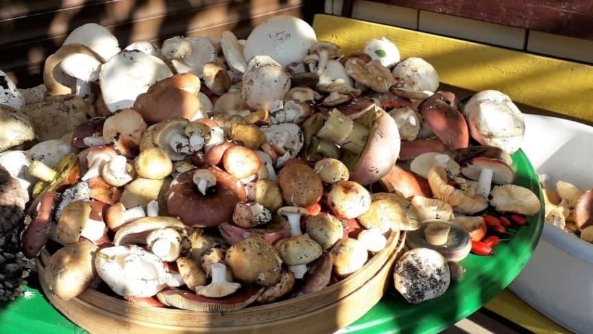 грибы Анапы