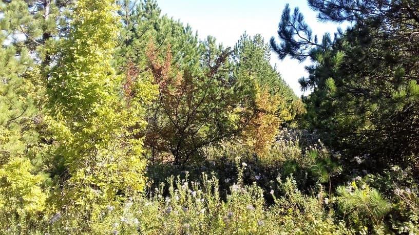 лес в анапе-2