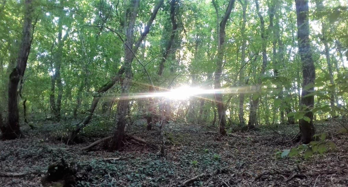леса в Анапе
