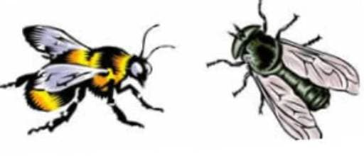 мухи и пчёлы