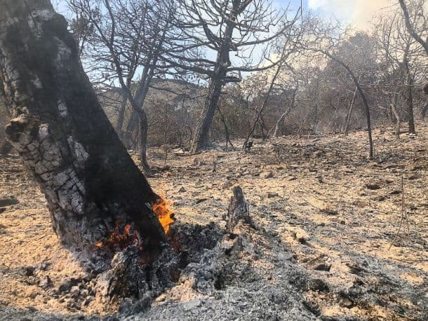 пожар на Утрише