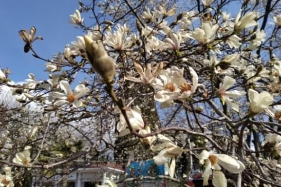 Весна приходит из Сочи