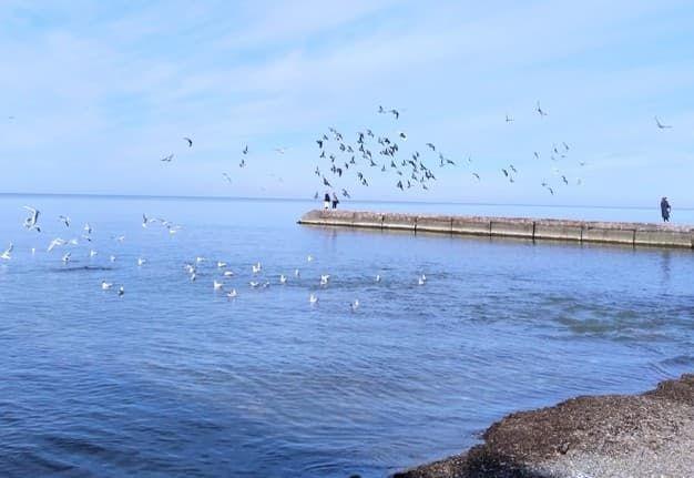 Сочи Черное море