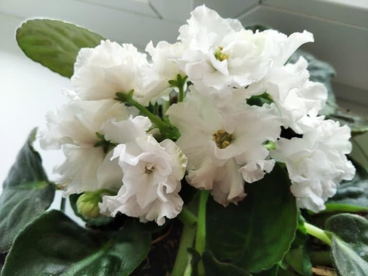 Запоздалая весна, как поздняя любовь...